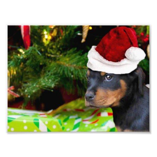 Christmas Rottweiler puppy Photo Print