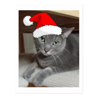 Christmas Russian Blue Gray Cat Post Cards