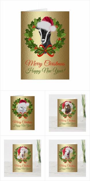 Christmas Santa Goat Breed Portraits