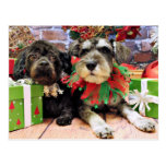 Christmas - Schnauzer Joey and ShihChon Oscar Postcards
