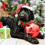 Christmas - Schnoodle - Zeus Photo Cutout