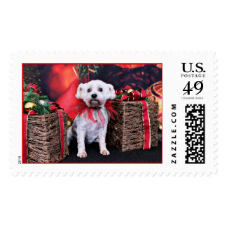 Christmas - Schnoodle - Zoey Postage