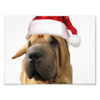 Christmas Shar Pei dog photo print