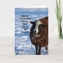Christmas Sheep From Our Farm to Yours Holiday Card