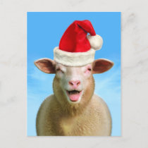 Christmas Sheep Holiday Postcard
