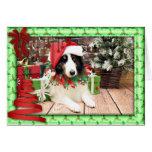 Christmas - Sheltie - Bandit Greeting Card