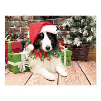 Christmas - Sheltie - Bandit Postcard