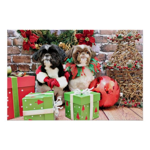 Christmas - Shih Tzu - Pixie and Willie Poster