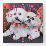 Christmas - Shihchon - Poochon -Newman and Wrigley Clock