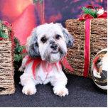 Christmas - ShihPoo - Gizmo Photo Cut Out