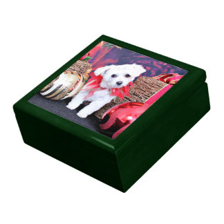 Christmas - ShihPoo - Trixie Gift Box