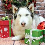 Christmas - Siberian Husky - Juliet Acrylic Cut Outs