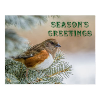 Christmas Songbird Postcard
