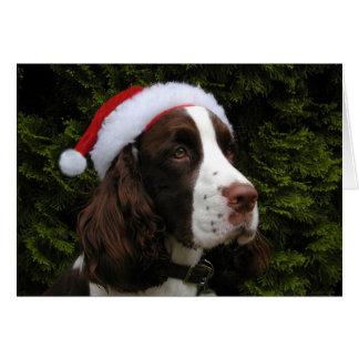 Christmas Springer holiday card