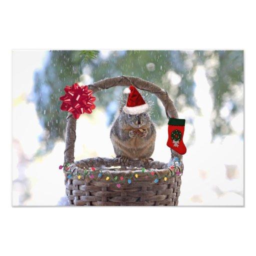 Christmas Squirrel in Snowy Basket Photo Print