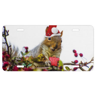 Christmas Squirrel License Plate
