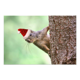 Christmas Squirrel on a Tree Photo Print