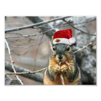 Christmas Squirrel Photo Print