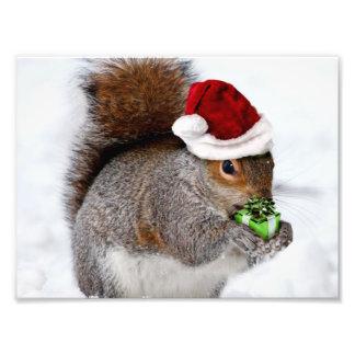 Christmas Squirrel Photo Art