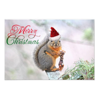 Christmas Squirrel Wearing Santa Claus Hat Photo