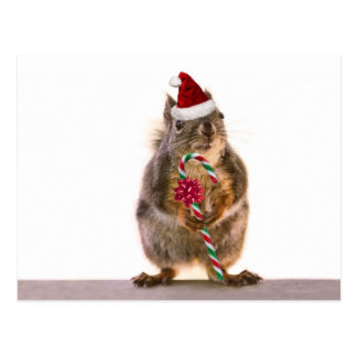 Christmas Squirrel with Candy Cane Postcard