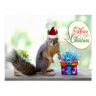 Christmas Squirrel with Christmas Presents Postcard