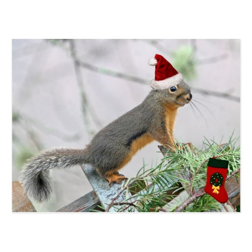 Christmas Squirrel with Christmas Stocking Postcard
