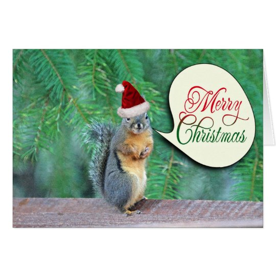 Christmas Squirrel with Evergreen Tree Background Card