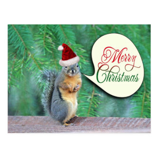 Christmas Squirrel with Evergreen Tree Background Postcards