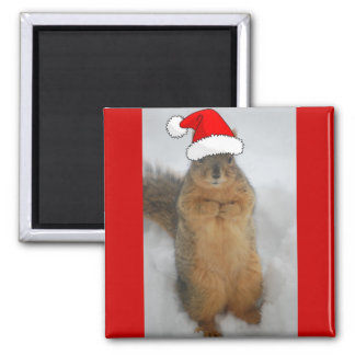Christmas Squirrels Magnet