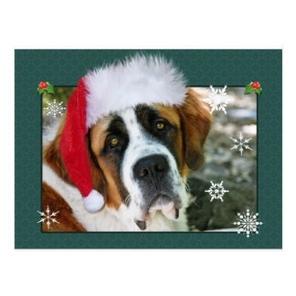 Christmas St. Bernard Dog Photo Postcard