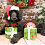 "Christmas - Standard Poodle - Bronco Cutout<br><div class=""desc"">Treated to pampering by Teagarden,  I was there to photograph this Standard Poodle Dog for it&#39;s Christmas Holiday portrait.  To see the rest of this photoshoot visit www.SayWoofPetography.photoreflect.com</div>"