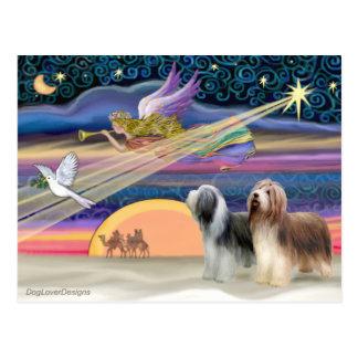 Christmas Star - Bearded Collies (two) Postcard