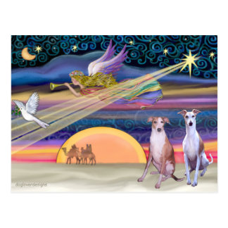 Christmas Star - Whippets (two) Postcard