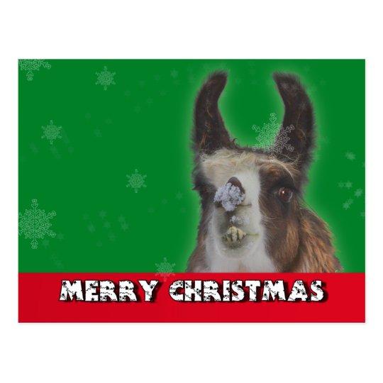 Christmas Stud Llama Happy New Year Postcard