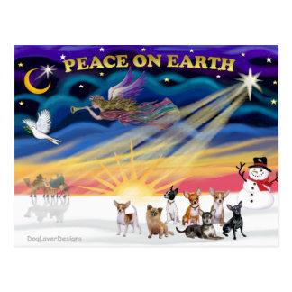 Christmas Sunrise - Chihuahuas (seven) Postcard