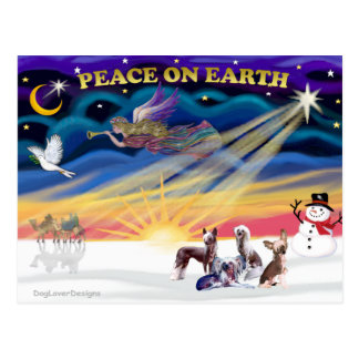 Christmas Sunrise - Chinese Cresteds (four) Postcard