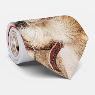 Christmas tie with Codita