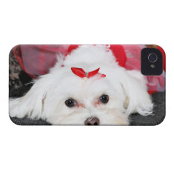 Case-Mate iPhone 4 Barely There Universal Case with Maltese Phone Cases design