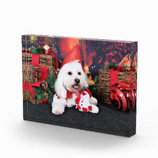 Christmas - Toby - Mixed Breed Award