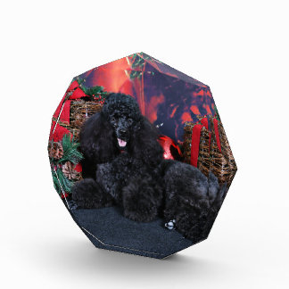 Christmas - Toby - Poodle Award