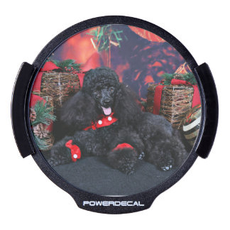 Christmas - Toby - Poodle LED Car Decal