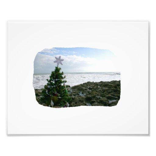 Christmas Tree Against Beach Rocks Photo