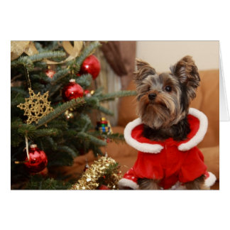 Christmas Tree And Yorkie Puppy Card