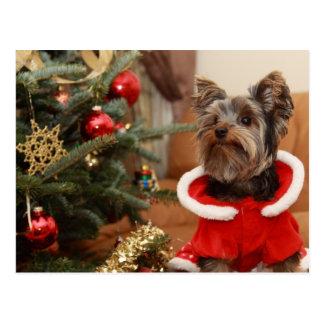 Christmas Tree And Yorkie Puppy Postcard