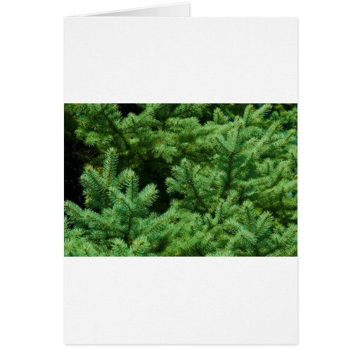 christmas tree branches card
