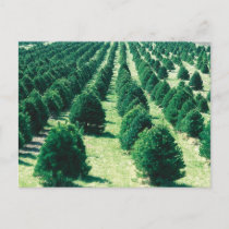 Christmas Tree Farm Holiday Postcard