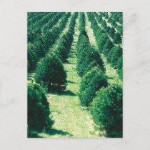 Christmas Tree Farm Holiday Postcard