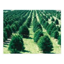 Christmas Tree Farm Postcard