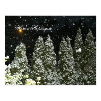 Christmas Trees at Night Postcard